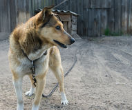 Hond Stock Afbeeldingen