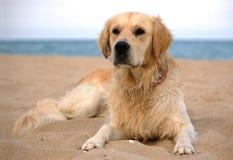 Hond 2 Royalty-vrije Stock Foto