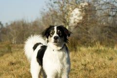 Hond 2 Royalty-vrije Stock Foto's