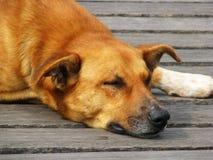 Hond 2 van de straat Royalty-vrije Stock Fotografie
