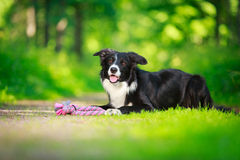 Hond Royalty-vrije Stock Afbeeldingen