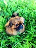 Hond Stock Foto