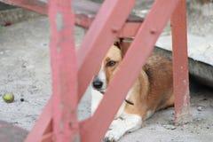 Hond Stock Fotografie