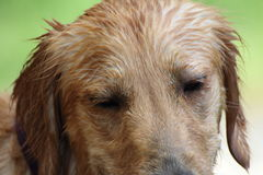 Hond Stock Foto's
