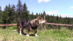 Hond stock videobeelden
