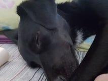 Hond Stock Foto's