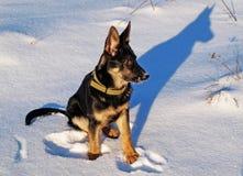 Hond aan Bal en zijn schaduw. Royalty-vrije Stock Afbeeldingen