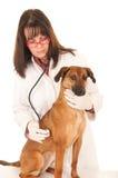 Hond aan de dierenarts Stock Afbeeldingen