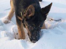 Hond aan de geuren van de Bal Royalty-vrije Stock Afbeeldingen