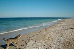 Hond aan de overzeese kant Stock Afbeeldingen