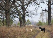 Hond in aard Stock Foto's