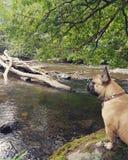Hond in aard stock foto