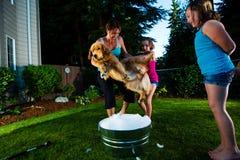 Hond aarzelend om een bad te nemen stock foto