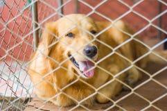 Hond achter de kooi stock afbeelding