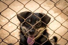Hond achter de omheining Stock Fotografie
