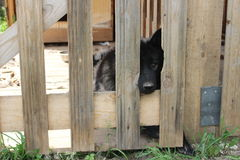 Hond achter de omheining royalty-vrije stock fotografie
