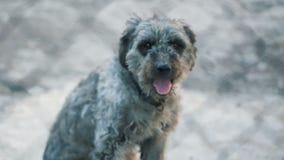 Hond achter kooi stock videobeelden