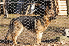 Hond achter omheining Stock Afbeeldingen