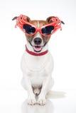 Hond als belemmeringskoningin Stock Foto's