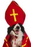 Hond als Nederlandse Sinterklaas Royalty-vrije Stock Afbeelding