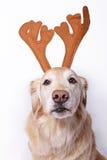 Hond als rendier stock fotografie