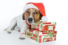 Hond als santa Royalty-vrije Stock Foto's