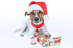 Hond als santa Stock Foto's