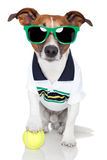 Hond als tennisspeler Royalty-vrije Stock Foto's