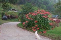 Hond, auto, huis en bloem stock afbeelding