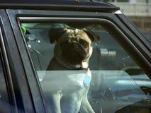 Hond in Autoraam royalty-vrije stock afbeelding