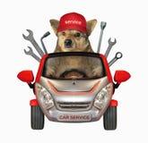Hond autowerktuigkundige in een auto stock afbeelding