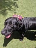 Hond 9 royalty-vrije stock afbeeldingen