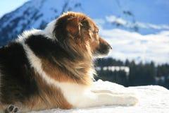 hond berg Royalty-vrije Stock Afbeeldingen