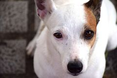 hond beste vriend stock afbeelding