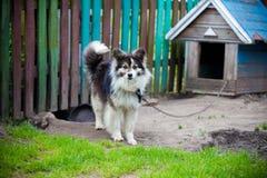 Hond bij de cabine Stock Afbeelding