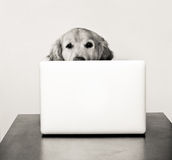 Hond bij de computer Stock Fotografie