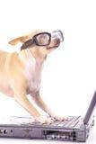 Hond bij de computerlezing e-mail Stock Foto's