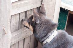 Hond bij de poort royalty-vrije stock fotografie