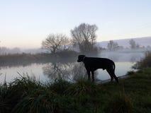 Hond bij de rivier Stock Afbeeldingen
