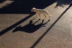Hond bij de straat royalty-vrije stock fotografie