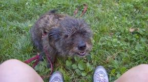 Hond bij de voet van de meester Royalty-vrije Stock Fotografie