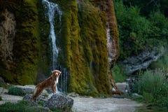 Hond bij de waterval Huisdier op aard buiten Weinig profiel van de rivierhond stock afbeeldingen