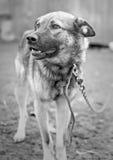 Hond bij dierlijke schuilplaats stock afbeelding
