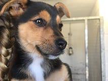 Hond bij een reddingsschuilplaats royalty-vrije stock foto