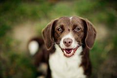 Hond bij het meer Royalty-vrije Stock Foto's