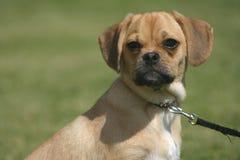 Hond bij het park Stock Afbeelding