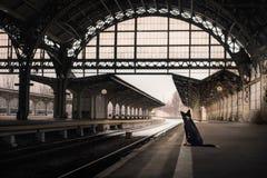 Hond bij het station Het reizen met het huisdier stock fotografie