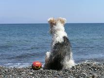 Hond bij het strand Stock Foto's