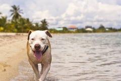Hond bij het strand Stock Fotografie