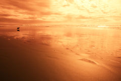 Hond bij het strand in rood licht Stock Afbeeldingen
